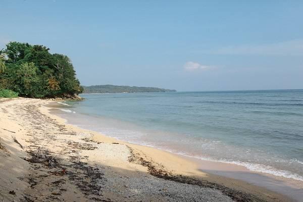 Coral+Restoration+Project+Scuba+Diver%2FSpecialist-Philippines
