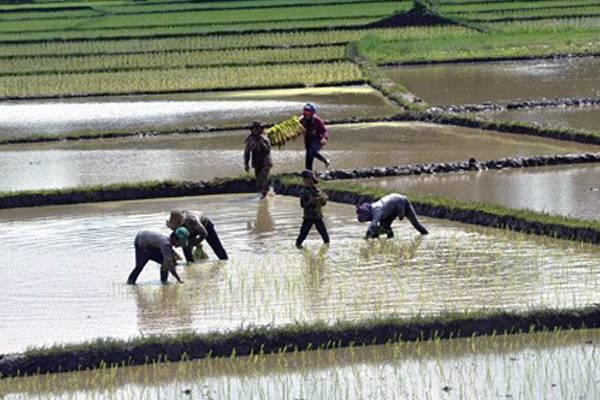 Agriculturalist-Cambodia