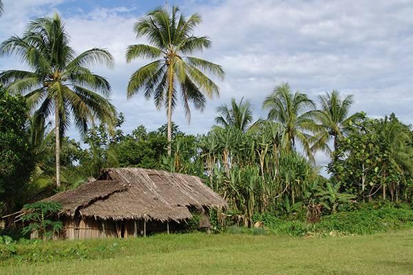 Field+Administrator-Papua